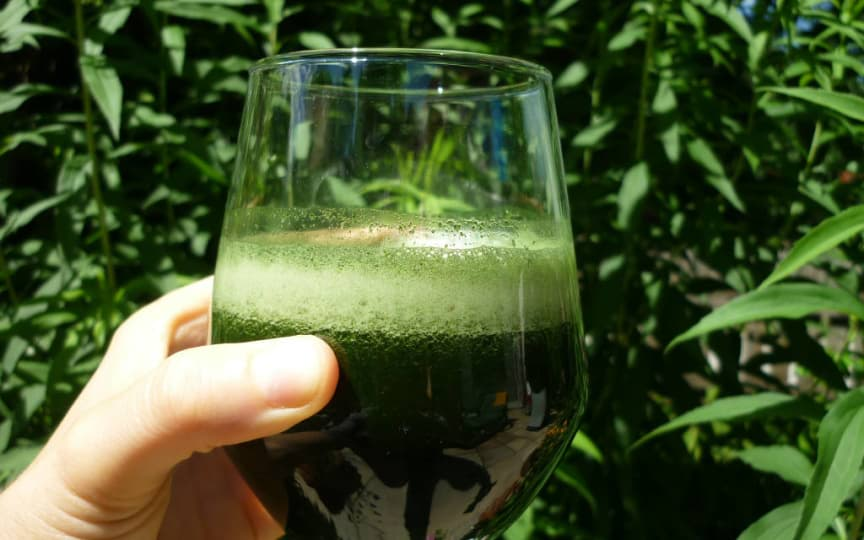 Weizengrassaft gesund