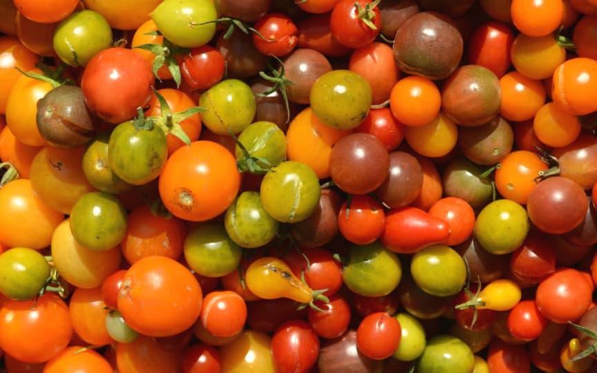 Tomaten sind wundervoll