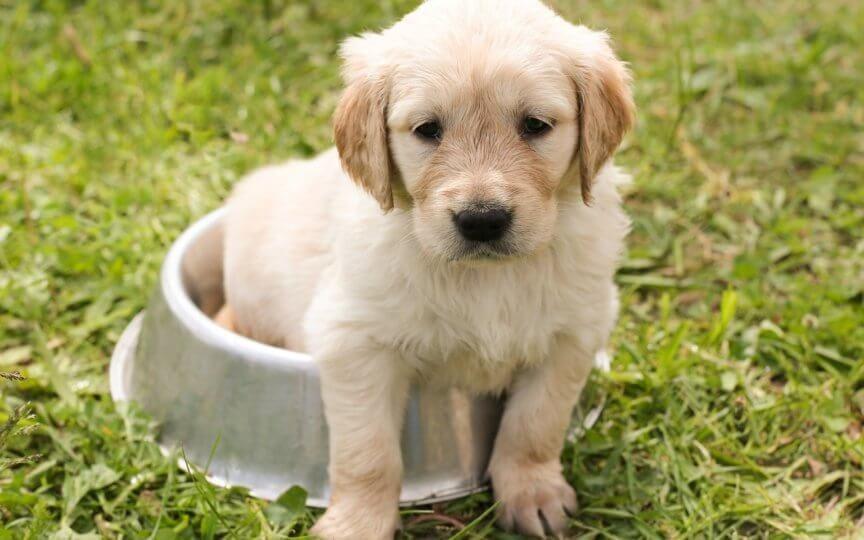 Hunde richtig ernähren BARF