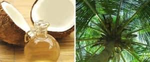 Kokosöl: unser Favorit für Küche & Gesundheit