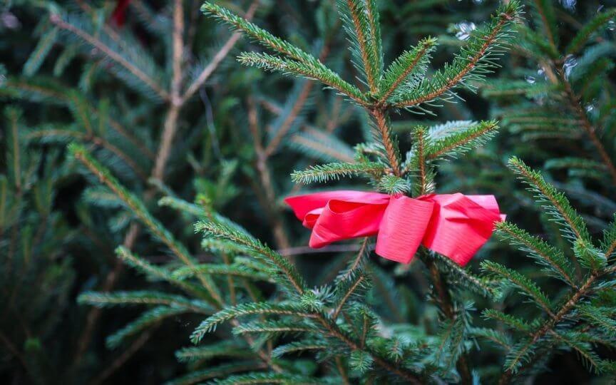 Nachhaltiger Christbaum