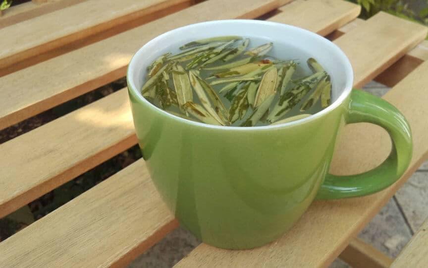 tee aus olivenblaettern