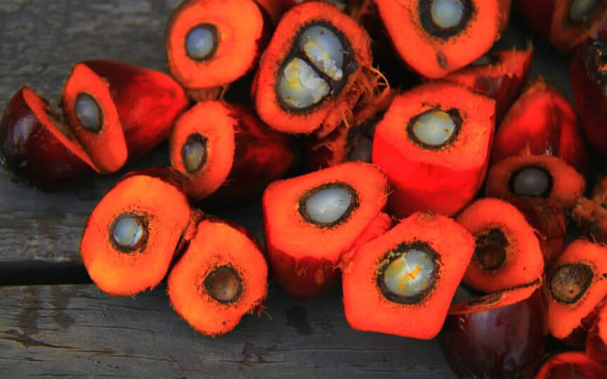 lebe lieber palmölfrei