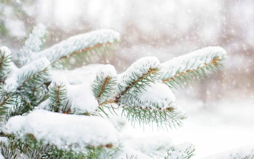 Weihnachten nachhaltig feiern