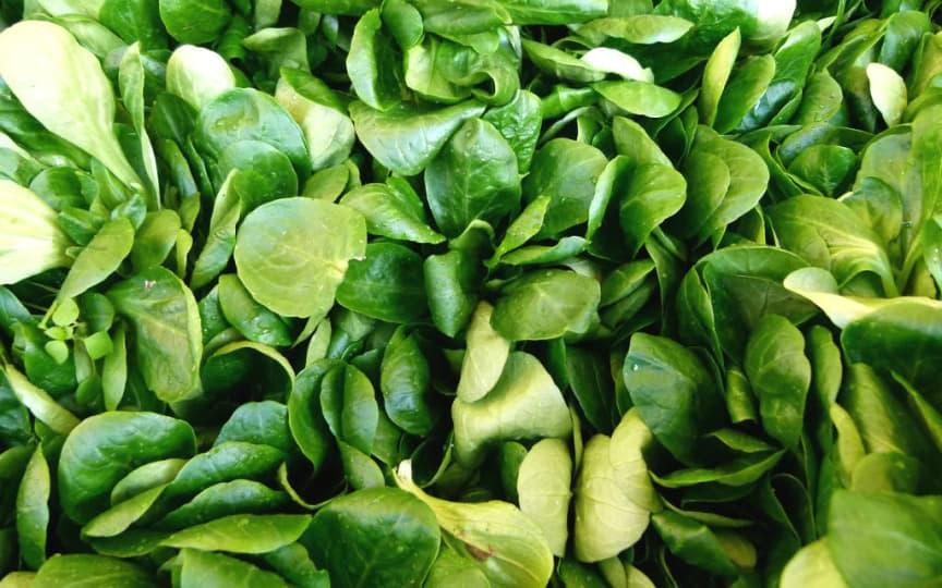 Feldsalat oder Vogerlsalat