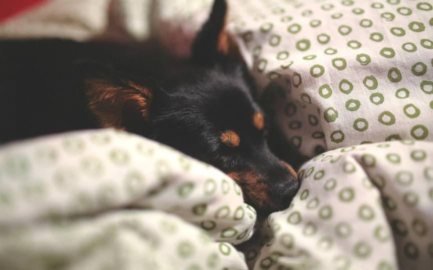 wunderbar kuschelige vegane Bettdecken