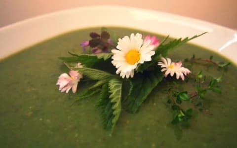 Wildkräuter Suppe